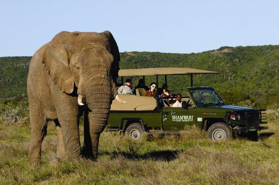 Shamwari Elephant - Safari