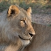 <h2>The Best of South Africa 2017</h2>14 Nights, 4 on Safari | 5 Rounds | Wine Tours & Sightseeing | November 3 – 17