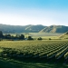 Villa Maria Vineyard, Gisborne, New Zealand