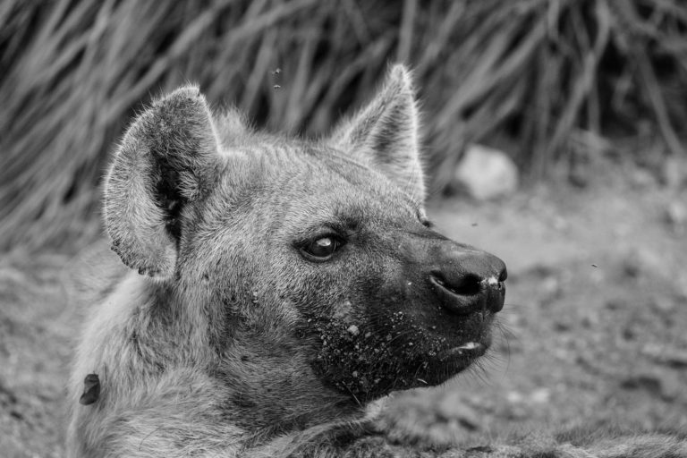 PerryGolf Safari Challenge on Biyamiti River in Kruger National Park