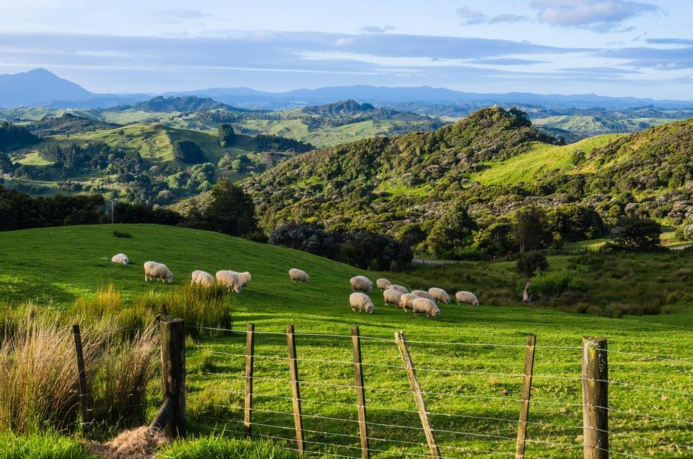 New Zealand Countryside, North Island