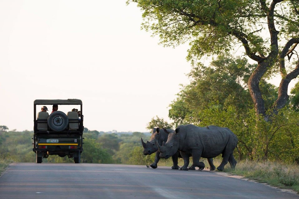 Two Rhinos, a Buggy and a Bird
