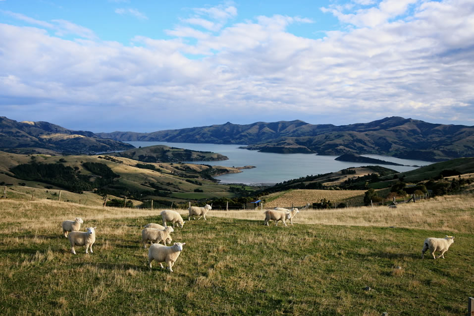 Akaroa, Banks Peninsula, South Island